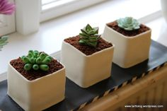 How to Make Potted Gumpaste Succulents - Tutorial - Cake Central. This is the first gum paste project that I think I might actually be able to tackle. Cake Central, Mini Cakes Tutorial, Fondant Tutorial, Fondant Cakes, Cupcake Cakes, Fondant Bow, Car Cakes, Fondant Figures, Sweetarts