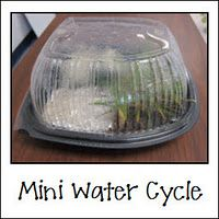 This is a wonderful hands on activity that shows each of the phases of the water cycle. Students could work in groups to create their own environment and explain to the class how each phase took place.