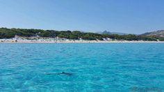 Un requin photographié par un internaute en Haute-Corse, plage de Saleccia