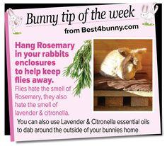 Bunny tip - Hang Rosemary to keep flies away! www.best4bunny.com