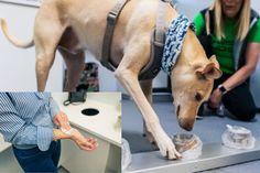 Cut Animals, Animals And Pets, Funny Animals, Bulldog Puppies, Cute Puppies, Cute Dogs, Brain Training, Dog Training, Helsinki Airport