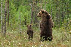 Galeria mostra como é difícil a vida de uma mamãe-urso