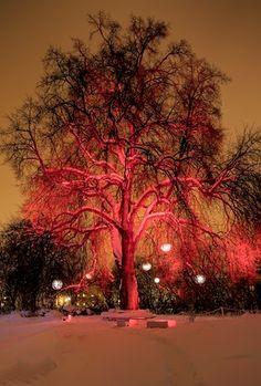 Winterlight 2010