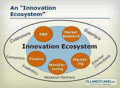 Islam Analysis (24): Building a healthy innovation 'ecosystem'