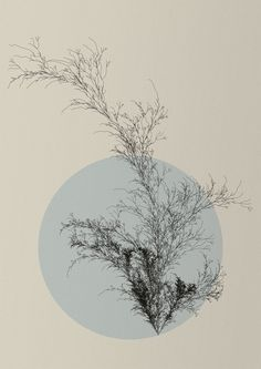 L-System Plant (Diana Lange) Tags: plant tree nature graphics generative processing fractal lsystem natureofcode gestaltung processingorg lindenmayer Aesthetic Backgrounds, Aesthetic Wallpapers, Illustrations, Illustration Art, Generative Art, Zen Art, Grafik Design, Wallpaper Backgrounds, Collages