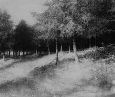 Elaine Green - 'Morning Light'. charcoal on paper 31 x 37 inches
