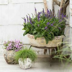 Assortments of different pots for plants.