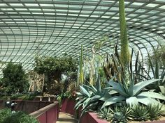 Gardens By The Bay (Singapore) - 2019 All You Need to Know Before You Go (with Photos) - Singapore, Singapore Mosquito Spray, Singapore Singapore, Before We Go, Gardens By The Bay, Tree Lighting, Out Of This World, Glass Domes, Just Amazing, Horticulture