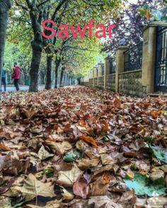 Sawfar