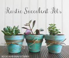 Resultado de imagem para succulents in pots