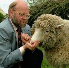 Dolly junto a uno de sus creadores, Ian Wilmut  #Edinburgh #Edimburgo #Escocia #Scotland #animales #animals Más información / More info: http://edinatours.com/edinablog/la-oveja-dolly-el-primer-animal-clonado-de-la-historia/