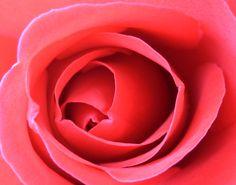 Eine Rose von meinem Schatz, und dazu Rotkäppchen Rosé - das Leben könnt enicht rosiger sein!
