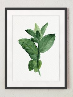 Mint Watercolor Painting, Herb kitchen art, Botanical Wall decor, Kitchen Art Print ,Mint to be, Green Herbs and Spices