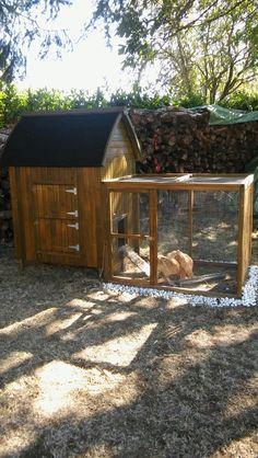 Ma passion pour les poulettes !   Praline & Noisette vous présente leurs super poulailler ou l'on peut stocker la nourriture dans le toit. Il vient de chez truffaud a partir de 120€