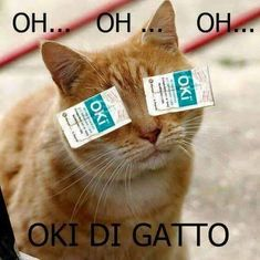 Oh oh oh oki di gatto Animals And Pets, Funny Animals, Hahaha Hahaha, Funny Times, Funny Facts, Cat Memes, Funny Moments, Funny Photos, Jokes