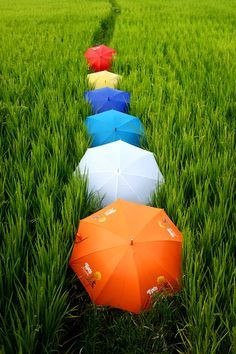 Umbrellas: Photo
