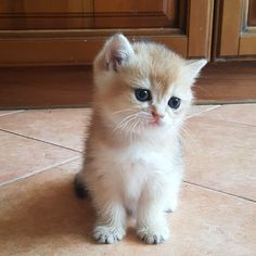 Cute Baby!!! #cats #cattoys #catowners