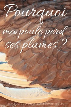 perte-plumes-poule-mue Chicken Pop, Hens, Voici, Agriculture, Diy, Gardening, Nature, Gardens, Raising Chickens