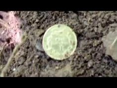 The find of a lifetime! - YouTube