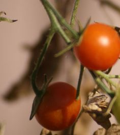 Organic Gardening Includes More Than Just Plant Life, But Animals Too. Each  Garden Is