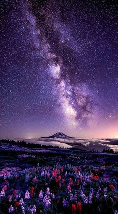 Wow! Our Planet, Milky Way, Night Skies, Reaching For The Stars, Under The Stars, Indian Paintbrush, Sparkling Stars, Happiness Meaning, Purple Sky