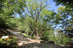 アプソプ谷 - WolMyeongDong(キリスト教福音宣教会)