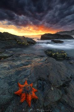 s t a r f i s h by Aaron Pryor - Photo 139004037 - 500px