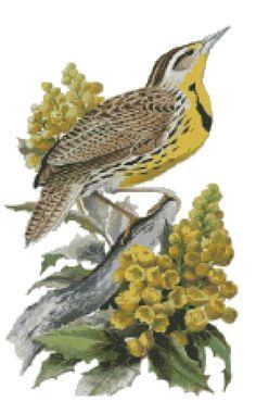 Oregon state bird and flower western meadowlark for Oregon craft floral