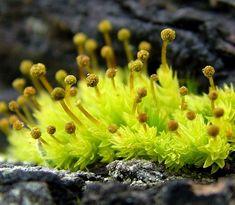 moss & spores