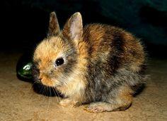 https://www.i-sabuy.com/ หวาน สัตว์ป่า สัตว์เลี้ยงลูกด้วยนม สัตว์ป่า กระต่าย สัตว์เลี้ยง เครา สัตว์มี