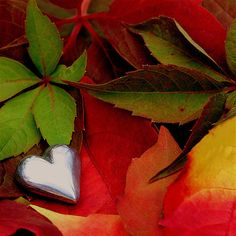 Forever autumn | Flickr - Photo Sharing!