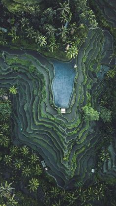 Paddy Fiels in Bali 🍃 You can go to Bali for £3 only with BnGet. You'll enjoy a 10 days luxury stay for 2 at the most famous 5-star hotel of the island. You just need to click on the picture!#BnGet#LiveYourDreams. ©: Hanging Gardens#bnget #Holiday #Luxury #hanginggardens #bali #ubud #5starhotel