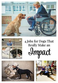 Dogs have a real impact on the lives of people who truly need them. Some breeds are a great fit for certain jobs. Read to explore the best jobs for dogs. Rescue Dogs, Animal Rescue, Funny Dogs, Cute Dogs, Dog Search, Cute Dog Photos, Dog Games, Therapy Dogs, Dog Training