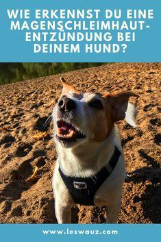 Wie erkennst du eine Magenschleimhautentzündung – Gastritis – bei deinem Hund? Good Fellows, Dog Care, Corgi, Cats, Health, Animals, Anton, Merlin, Camilla
