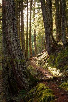 Ross Lake Trail, North Cascades, Washington