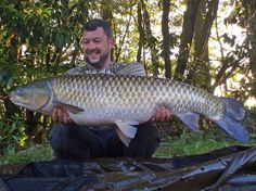 The Big Grassie out for the first time in 2015! Check out our weekly catch reports here: http://www.frenchcarpandcats.com/news.php