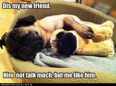 I'd like to think my pug wouldn't talk like a complete moron. The pic is cute, though.