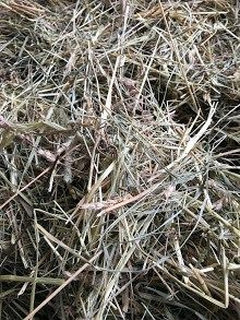 🐴 Which Hay is the Best for Livestock and Horses❓🤔  How frequently this question arises! What is the difference between first, second, and third cut? Which cut is the best?  Let's look at two opposite scenarios...