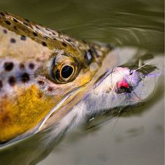 Fishing Photography, Fly Tying, Trout, Fly Fishing, Animals, Image, Women, Animales, Animaux