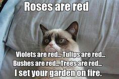 Jajaja. No me gustan los gatos pero este me encanta!!!