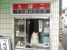 この店通い詰めたい