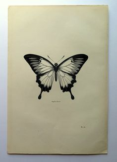1860 Antique Ulysses butterfly print vintage by LyraNebulaPrints
