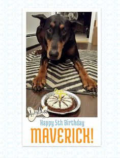 Happy 5th Birthday Maverick!