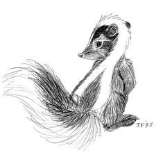 skunk drawing - Google Search