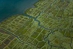 Marais de l'embouchure de la Seudre - La Tremblade 17390 - Charente Maritime (17) - Poitou Charente