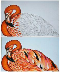 #milliemarotta #animalkingdom #animals #milliemarottacoloringbook