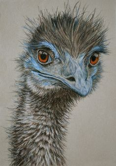 Emu II  30 x 21 cm Pastel on handmade paper $650 framed   SOLD