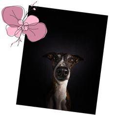 """Páči sa mi to: 6,323, komentáre: 49 – Ako so psom? (@akosopsom) na Instagrame: """"Vedeli ste, že odtlačok psieho nosu je tak jedinečný ako odtlačok ľudského prstu? Na svete sa…"""" Moose Art, Animals, Instagram, Animales, Animaux, Animal, Animais"""