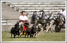 chariots, you have to love the chariot race mini's and Maxies