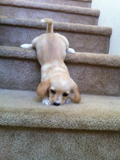 baby puppy goes down stairs!